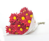 Bunch of red and yellow daisies. A bunch of red and yellow daisies royalty free stock photos