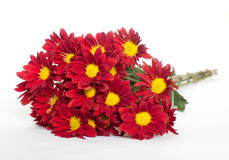 Bunch of red and yellow daisies. A bunch of red and yellow daisies royalty free stock images