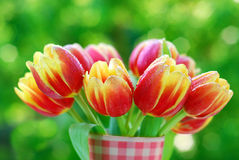 Bunch of red- yellow tulips Stock Photos