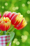Bunch of red- yellow tulips Royalty Free Stock Photography