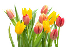 Bunch of Red and Yellow Tulips Stock Images