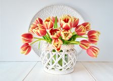 Bunch of red-yellow tulips on white wooden background Stock Images