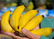 Bunch of ripe bananas Stock Photo