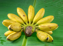 Bunch of ripe bananas  on white background Stock Photo