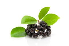 Bunch of ripe black chokeberry on a white background royalty free stock photos