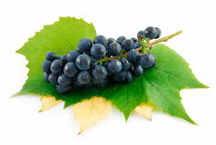 Bunch of Ripe Blue Grapes with Leaf Isolated stock image