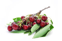 Bunch of ripe cherries Stock Images