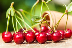 Bunch of ripe cherries spilled from Royalty Free Stock Images