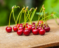 Bunch of ripe cherries Royalty Free Stock Photography