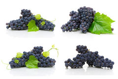 Bunch of ripe dark grapes isolated on white background royalty free stock photo