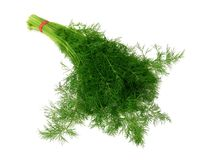 Bunch of ripe dill isolated on white Royalty Free Stock Image