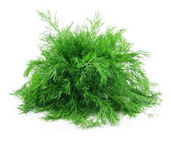 Bunch of Ripe Dill Isolated on White Stock Photography