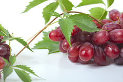 Bunch ripe, fresh red grapes with leaves.  Stock Photography