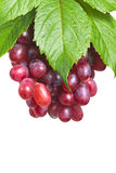 Bunch ripe, fresh red grapes with leaves. Bunch ripe, fresh red grapes with leaves isolated on a white background Stock Photography