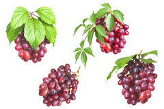 Bunch ripe, fresh red grapes with leaves. Bunch ripe, fresh red grapes with leaves isolated on a white background Royalty Free Stock Image