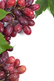 Bunch ripe, fresh red grapes with leaves. Bunch ripe, fresh red grapes with leaves on a white background Stock Photo
