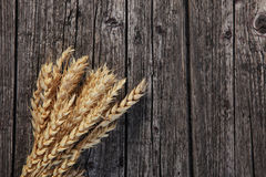 Bunch of ripe golden wheat Royalty Free Stock Photography