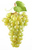 Bunch of ripe grapes. Royalty Free Stock Photo