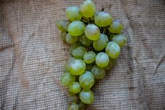 A bunch of ripe grapes against a burlap. Bunch of ripe grapes against a burlap royalty free stock photos