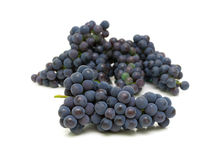 Bunch of ripe grapes isolated on white background Royalty Free Stock Photos