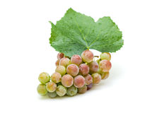 Bunch of ripe grapes with leaf Royalty Free Stock Images