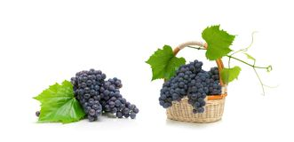Bunch of ripe grapes with leaves in a wicker basket on white bac. Bunch of ripe grapes with leaves in a wicker basket isolated on white background. horizontal Stock Image