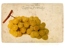 Bunch of ripe grapes. Old postcard Royalty Free Stock Photo