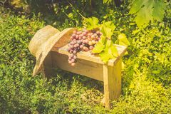 A bunch of ripe grapes and a summer straw hat lie on a small wooden bench. Seasonal harvest. Copy space. stock image