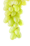 Bunch of ripe grapes on a white. Background Royalty Free Stock Photo