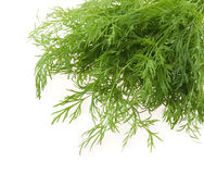 Bunch of ripe green dill Royalty Free Stock Photos