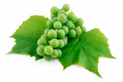 Bunch of Ripe Green Grapes with Leaf Isolated Royalty Free Stock Image