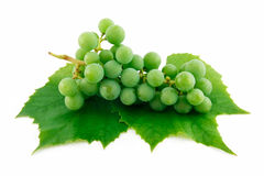 Bunch of Ripe Green Grapes with Leaf Isolated royalty free stock images