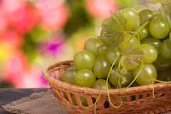 Bunch of ripe green grapes on a wooden table with blurred background stock image