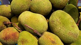 A bunch of ripe jackfruits Stock Photo