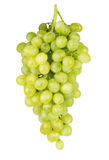 bunch of ripe and juicy green grapes close-up on a white background stock photo