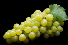 Bunch of ripe muscat grapes isolated. Bunch of ripe muscat grapes on black background Stock Image