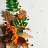 A bunch of ripe orange mountain ash with green leaves. Autumn dry leaves. Black berries. White stone or plaster. Background. View from above. Copy space Stock Image