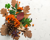 A bunch of ripe orange mountain ash with green leaves. Autumn dry leaves. Black berries. White stone or plaster royalty free stock photos