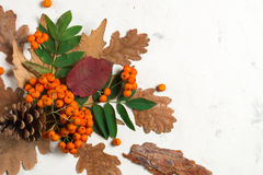 A bunch of ripe orange mountain ash with green leaves. Autumn dry leaves. Black berries. White stone or plaster royalty free stock photo