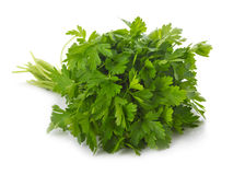 Bunch of ripe parsley isolated stock image