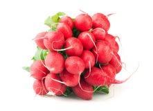 Bunch of ripe radish on white background Stock Photography