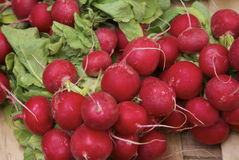 Bunch of ripe red radish. Bundles of ripe red radishes on an open air fruit and vegetable stall ready for making salad Royalty Free Stock Photos