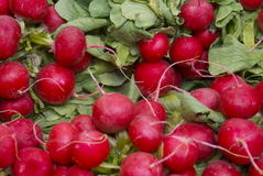 Bunch of ripe red radish. Bundles of ripe red radishes on an open air fruit and vegetable stall ready for making salad Stock Photos