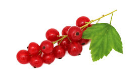 Bunch of ripe redcurrant with green leaf (isolated) Royalty Free Stock Photography