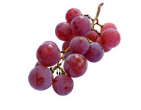 Bunch of ripe scented grapes Royalty Free Stock Photo
