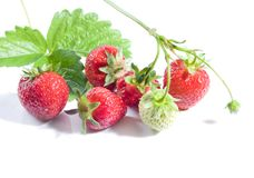 Bunch of ripe strawberries Royalty Free Stock Photography