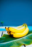 Bunch of ripe tropical bananas Royalty Free Stock Photography