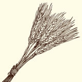 Bunch of ripe wheat Royalty Free Stock Photography