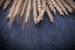Bunch of ripe wheat and rye ears on black background Royalty Free Stock Photo