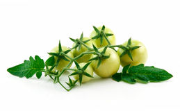 Bunch of Ripe Yellow Tomatoes with Green Leaf royalty free stock photo
